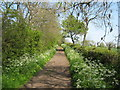 NZ2820 : Patches Lane in Springtime by peter robinson