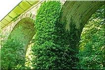 J4681 : Crawfordsburn viaduct (summer) by Albert Bridge