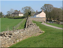 NY6366 : Hadrian's Wall east of Turret 48a (Willowford East) by Mike Quinn