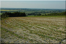 SU2886 : View across Vale of White Horse by Philip Halling