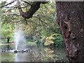 SK5640 : Nottingham Arboretum by John Sutton