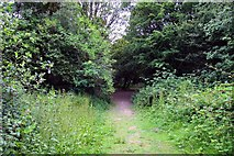 SP4802 : Path onto Jarn Heath by Steve Daniels