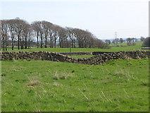 NZ0168 : The Vallum east of Carr Hill Farm by Mike Quinn
