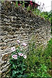 SP5036 : Wall at Kings Sutton by Graham Horn