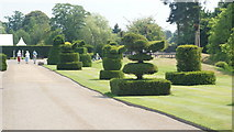 TQ4745 : Topiary at Hever Castle, Kent by Peter Trimming