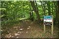 TL7907 : Birch Wood by Glyn Baker