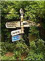 SY5999 : Cattistock: signpost opposite St. Helen's Lane by Chris Downer