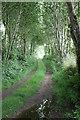 SW4330 : Tree-lined track by Elizabeth Scott