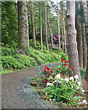 NU0702 : Flowers by the footpath, Cragside by Andy F