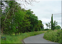 N5542 : Trees on the road's edge: Derryhinch, Co. Meath by Dylan Moore
