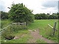 SJ5575 : Footpath into Kingsley by David Quinn