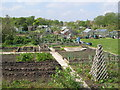 NZ2467 : Allotments on Little Moor by Mike Quinn