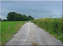 R4544 : Farm track near Adare, Co. Limerick by Dylan Moore