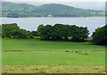 R7279 : Lough Derg, Co. Tipperary by Dylan Moore