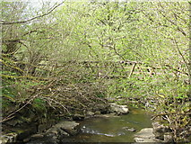 NY9038 : Middlehope Burn and footbridge by Mike Quinn