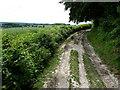 TQ5959 : North Downs Way by Chris Gunns