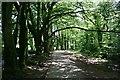 SX2268 : Footpath, Trees, River by Tony Atkin