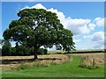 SK1913 : Path From Croxall Church by Geoff Pick