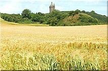 J4772 : Barley field, Scrabo near Newtownards by Albert Bridge