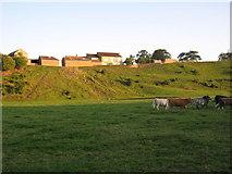 NZ2413 : Howden Hill Farm by peter robinson