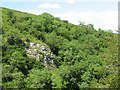 NY7207 : Crag Wood, Smardale Gill by Stephen Craven