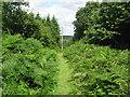 TQ6441 : High Weald Landscape Trail in Snipe Wood by David Anstiss