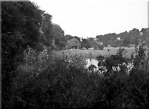 SU9948 : The Wey Navigation south of Guildford by Dr Neil Clifton