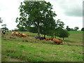 SE9063 : Farmland, Towthorpe Wold by JThomas