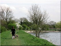 SP9113 : Walking the dogs along the Earth Dam, Tringford Reservoir by Chris Reynolds