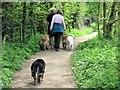 SP9113 : Dog Walking at Tringford Reservoir by Chris Reynolds