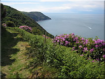 SS7849 : Coast path below Old Burrow Hill by Philip Halling