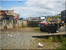 NM6797 : Mallaig Harbour by Ivan Hall