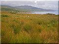 NR5773 : Rushy coastal meadow west of An Dunan Fort by C Michael Hogan