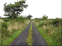 G7956 : Road at New Island by Kenneth  Allen