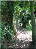 TG3204 : Narrow path skirting property on the edge of Low Common by Evelyn Simak