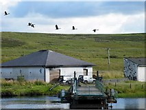 NS2472 : Geese at Ardgowan Fishery by Thomas Nugent