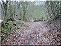 SJ5927 : Leaf covered woodland track by Row17
