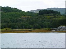 NM6559 : The Glencripesdale Burn reached Loch Sunart by Gordon Brown