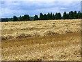 SU0227 : Rows of straw, Compton Down by Maigheach-gheal