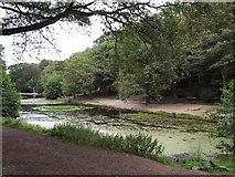 TQ2272 : Queen's Mere, Wimbledon Common by Derek Harper