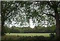 TQ2373 : Putney Heath cricket ground by Derek Harper