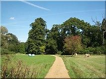 SU5598 : Nuneham Courtenay Arboretum: track through grassland by Keith Salvesen