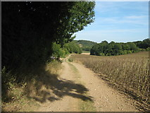TR0149 : Farm track near Challock Manor Church by David Anstiss