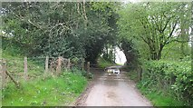 SO5763 : Gated road, Leysters by Richard Webb
