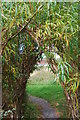 NZ2064 : Willow tunnel, scotswood community garden, Newcastle upon Tyne by hayley green
