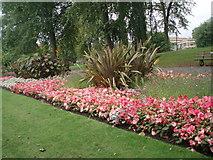 SE2955 : Flowers in Valley Gardens by Paul Gillett