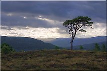 NH9506 : Near the Treeline, Rothiemurchus Lodge by Mick Garratt