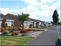 SZ0995 : Cox Avenue Bournemouth by Nigel Mykura