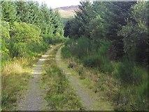 NX5362 : Forest track near Moneypool Burn by Ann Cook