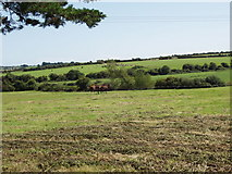 S5706 : Horses on pasture near Knockeen by David Hawgood